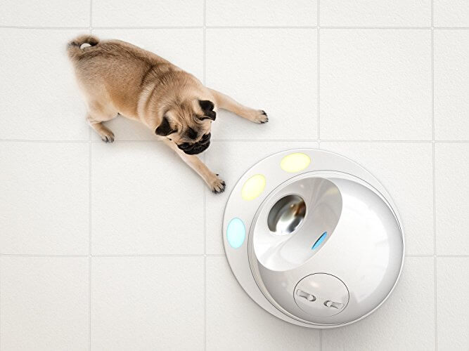 Pug plays with CleverPet dog game console
