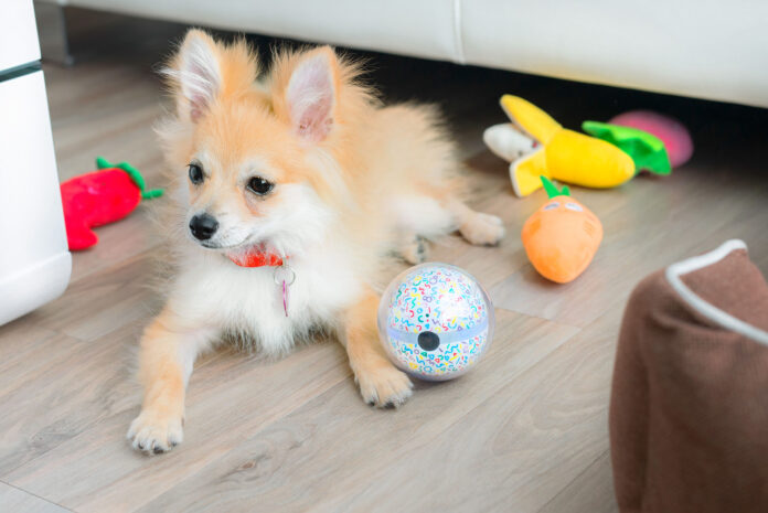Cute doggie plays with Pebby interactive dog ball
