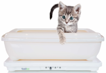 Kitten sitting in Tailio smart health monitor for cats