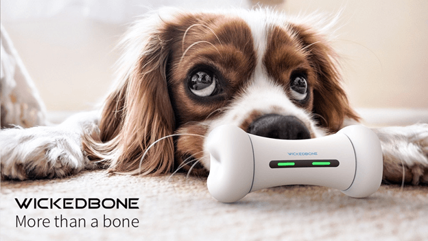 Cute dog loves his Wickedbone