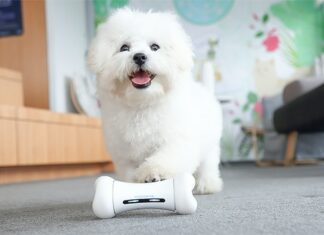 Cute white poodle plays with Wickedbone smart dog toy