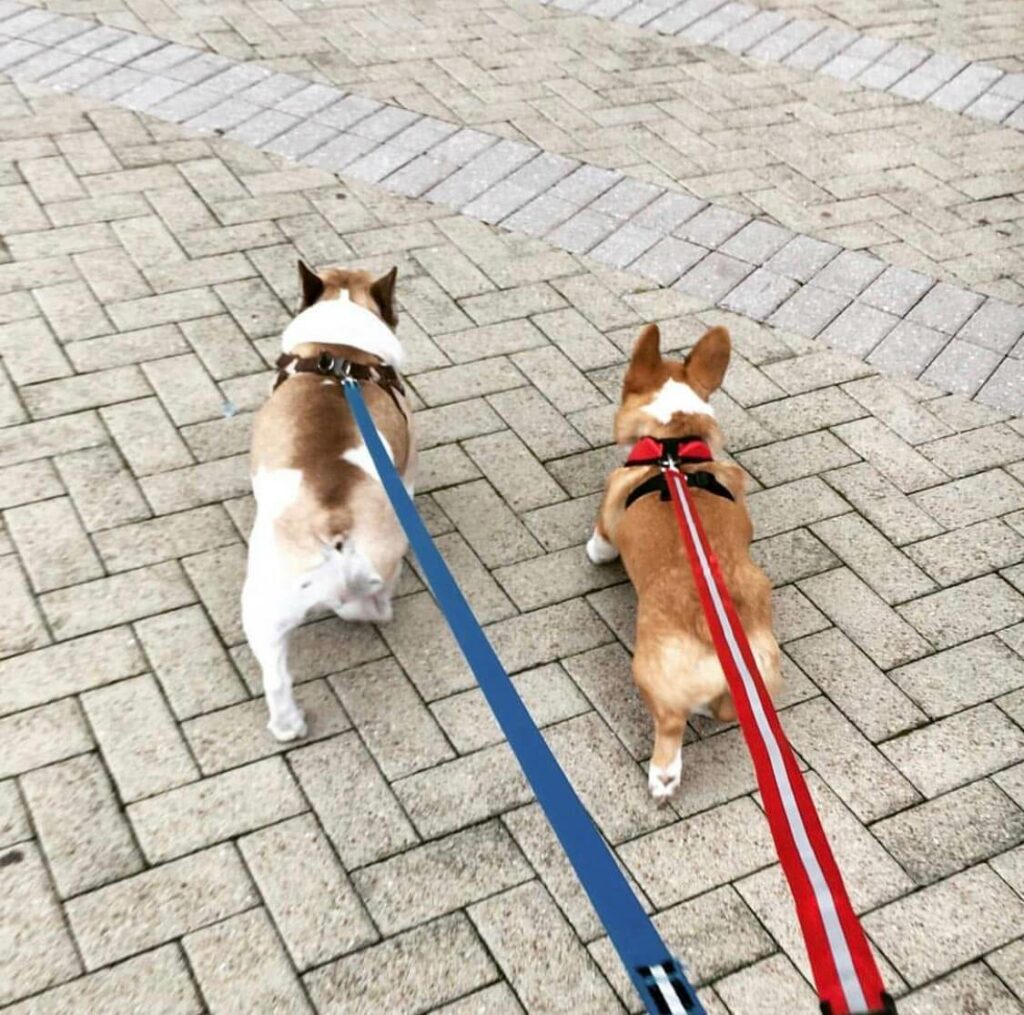 Doggie BFFs Teddy and Winston met on Rover.com