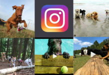 Best Doggie Daycares on Social Media