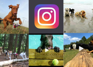 5 Best Doggy Daycare accounts to follow on Instagram - Inspiring Social Media dog profiles