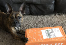 Sadie with her Bullymake subscription box for dogs