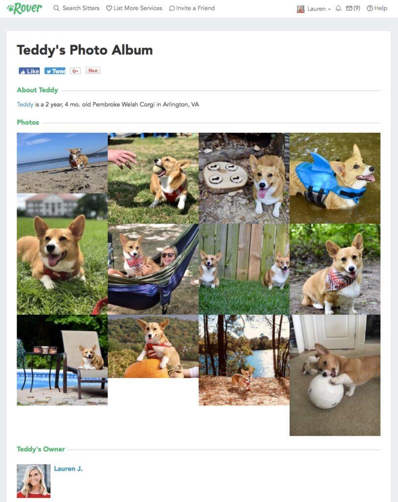 Rover app review profile screen shot