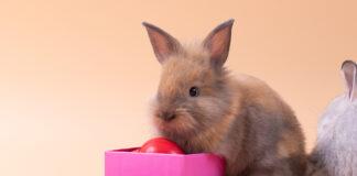 rabbit opens his bunny subscription box