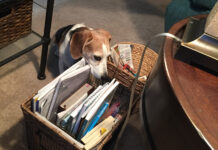 Petcam catches Roxy the Beagle stealing owner's stuff