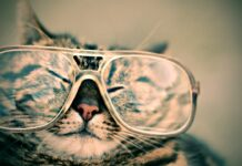 Technie Cat wants a Geeky Cat Names
